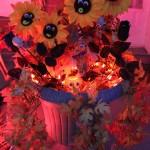 Fleurs avec des yeux